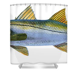 Snook Shower Curtain by Carey Chen