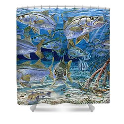 Snook Cruise In006 Shower Curtain by Carey Chen