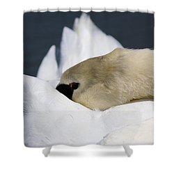 Snoozer - Swan Shower Curtain by Travis Truelove