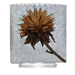 Shower Curtain featuring the photograph Snow And Thistles by Janice Westerberg