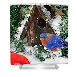 Snow Bluebird Christmas Card Shower Curtain