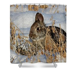 Snow Bunny Shower Curtain by Penny Meyers