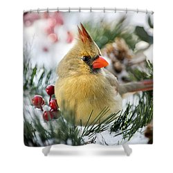 Shower Curtain featuring the photograph Snow Cardinal by Christina Rollo