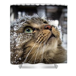Snow Cat Shower Curtain