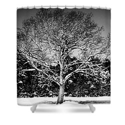 Snow Covered Tree Shower Curtain