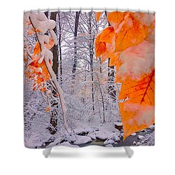 Snow Covered Woods And Stream Shower Curtain