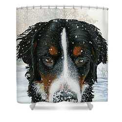 Snow Day Shower Curtain by Liane Weyers