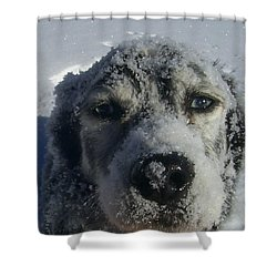 Snow Dog Shower Curtain