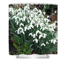 Snow Drops Shower Curtain by John Williams