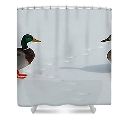 Shower Curtain featuring the photograph Snow Ducks by Mim White