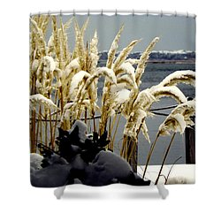 Snow Dust Shower Curtain by Karen Wiles