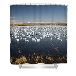 Snow Geese - Bosque Del Apache Shower Curtain