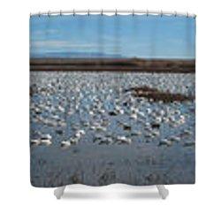Snow Geese Bosque Shower Curtain by Steven Ralser