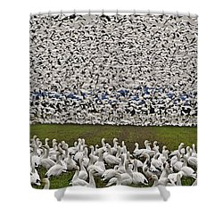 Snow Geese By The Thousands Shower Curtain by Valerie Garner