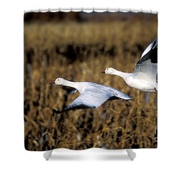 Snow Geese Shower Curtain by Steven Ralser