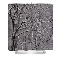 Snow In The Trees At Bulls Island Shower Curtain