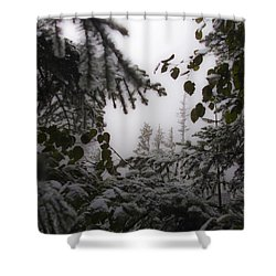 Snow In Trees At Narada Falls Shower Curtain