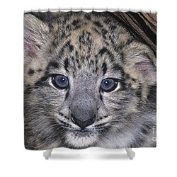 Shower Curtain featuring the photograph Snow Leopard Cub Endangered by Dave Welling