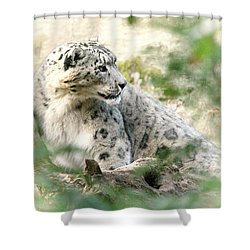 Snow Leopard Pose Shower Curtain by Karol Livote