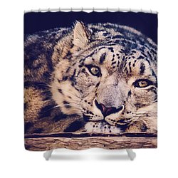 Snow Leopard Shower Curtain by Sara Frank