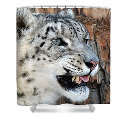 Snow Leopard Snarl Shower Curtain by Ramona Johnston