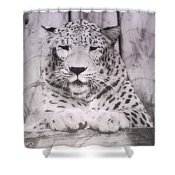 White Snow Leopard Chillin Shower Curtain by Belinda Lee