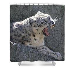 Shower Curtain featuring the photograph Snow Leopard Yawn by Neal Eslinger