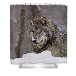 Snow Nose Shower Curtain