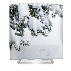 Snow On Winter Branches Shower Curtain by Elena Elisseeva