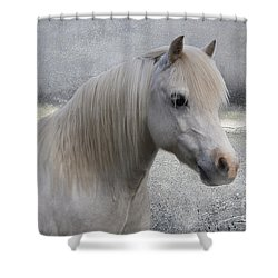 Snow Pony Shower Curtain by Linda Lees