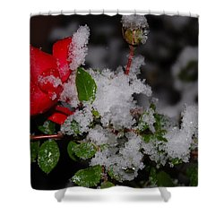 Shower Curtain featuring the photograph Snow Rose by Mim White