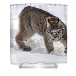 Snow-shovelling Lynx Shower Curtain by Dee Cresswell