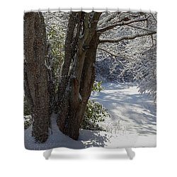 Snow Sparkles Shower Curtain by Dianne Cowen