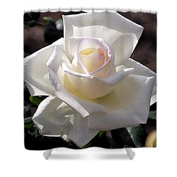Snow White Rose Shower Curtain by Kirt Tisdale