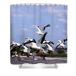 Snowbirds Heading South Shower Curtain