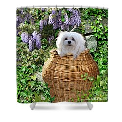 Shower Curtain featuring the mixed media Snowdrop In A Basket by Morag Bates