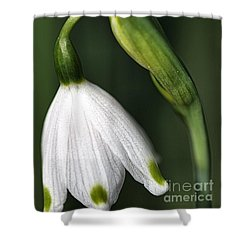 Shower Curtain featuring the photograph Snowdrop by Joy Watson