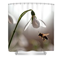 Snowdrops And The Bee Shower Curtain by Torbjorn Swenelius