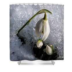 Snow White Snowdrops In The Snow Shower Curtain