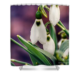 Snowdrops Shower Curtain by Kerri Farley
