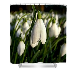 Shower Curtain featuring the photograph Snowdrops by Nina Ficur Feenan
