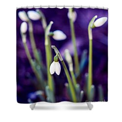 Snowdrops - One For All And All For One Shower Curtain