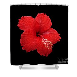 Shower Curtain featuring the photograph Snowflake Hibiscus by Judy Whitton