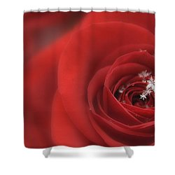 Snowflakes On A Rose Shower Curtain by Lori Grimmett