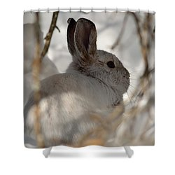 Snowshoe Hare Shower Curtain by James Petersen