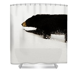 Snowy Bear Shower Curtain