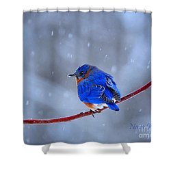 Snowy Bluebird Shower Curtain