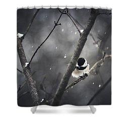 Snowy Chickadee Shower Curtain