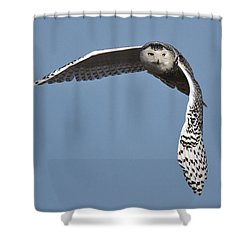 Snowy Shower Curtain by Wes and Dotty Weber
