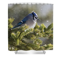 Snowy Day Blue Jay Shower Curtain